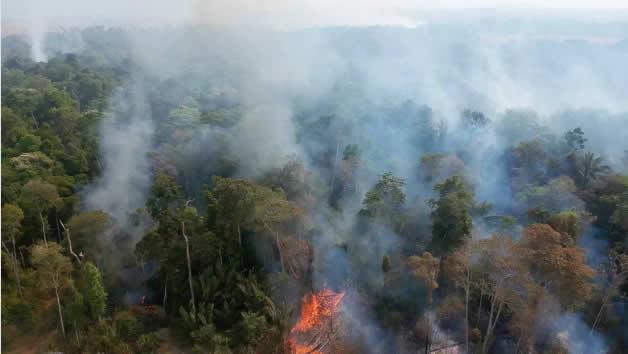 Fogo começa às margens da rodovia e adentra a mata fechada da Amazônia. (Foto: Emiliano Capozoli/Ed.Globo)