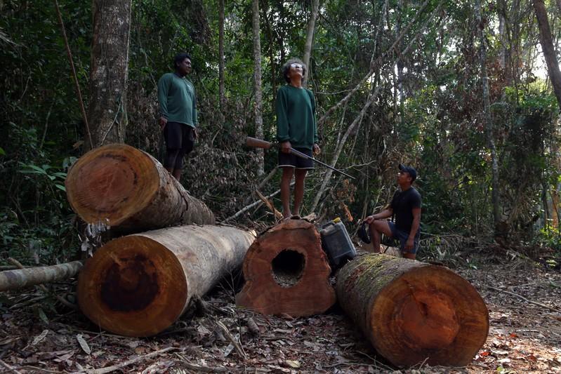 Assassinatos, ameaças e milícias: desmatamento na Amazônia é crime em larga escala, diz HRW