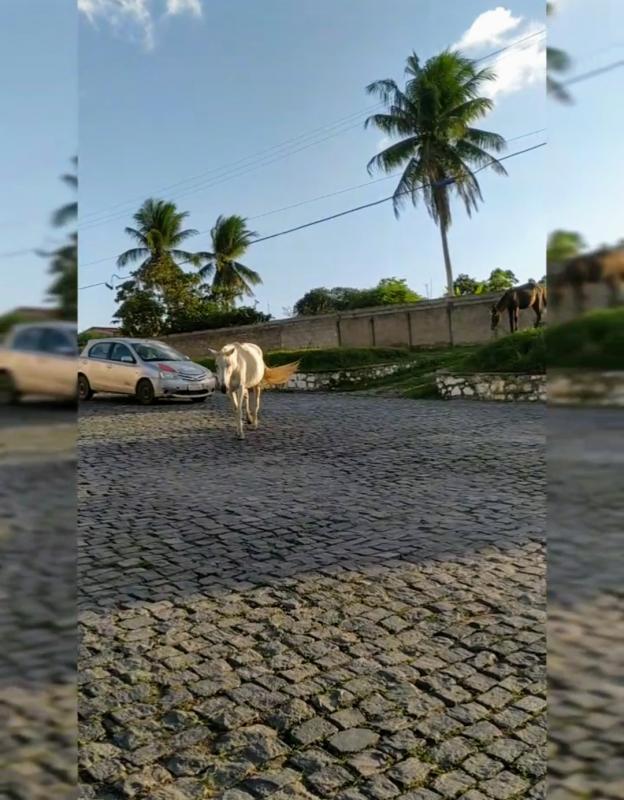 Animais soltos na rua: quem arca com os prejuízos em caso de acidente?